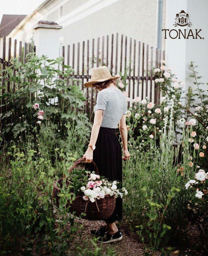 TONAK Collection  2016